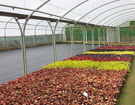 West Kington Nurseries - Liners