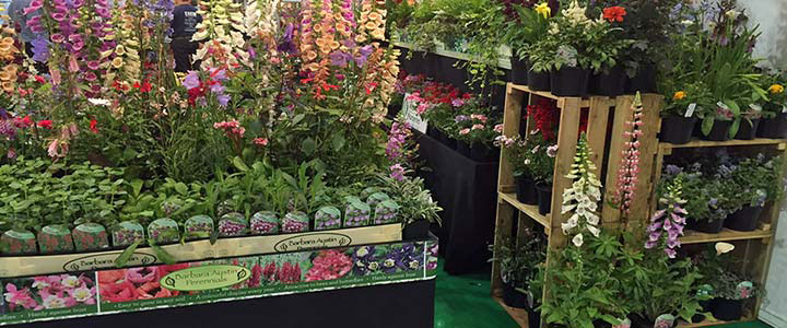 West Kington Nurseries - Become a Retail Stockist